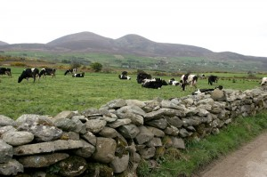The Two Paps of Anu, Shrone, Co. Kerry